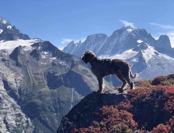 can you take your dog on the tour du Mont Blanc?